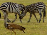Karen Blixen Camp Safari