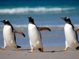 Ocean Diamond - Dancing Penguins