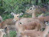 Wildlife at the Thornybush Reserve