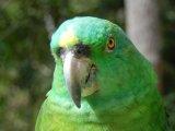Copan Bird Park
