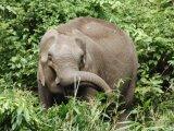 Wild elephant at the Reseve