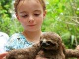 M/V aqua amazon cruise, baby sloth
