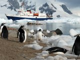 Antarctica Cruise on board the Ushuaia