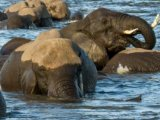 Chobe Game Lodge - Water Safari on the Zambezi river