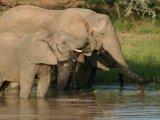Big Five Safari drive
