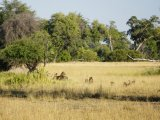 Camp Okavango - Walking Safari