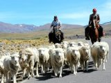 Patagonian scene
