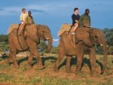 Elephant Back Safari in Camp Jabulani