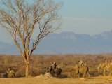 Elephant Back Safari in Camp Jabulani