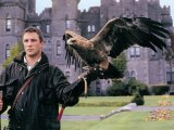 Falconry in Ashford Castle