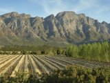 Franschhoek Country House & Villas - The Vinyard