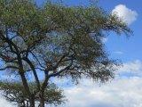 Masai National Park