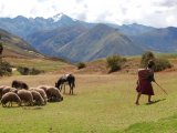 A Shepherd near Chincheros