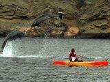 Playful Dolphins (M.V. Eclipse)