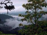 Cloud Forest Excursion in Mashpi, Ecuador