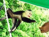 Monkey Island Excursion in Gamboa