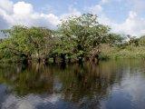 Amazonia Region (Metropolitan)