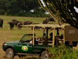 Mweya Safari Lodge - Game Drive