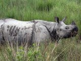 One Horned Rhino Assam - India, by Diganta Talukdar