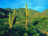 Cardones - the Giant Cactus of Northern Argentina