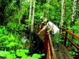 Boardwalk at the Inkaterra Reserva Amazonica Lodge