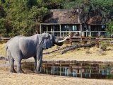 Savute Safari Lodge -  A friendly visitor to the lodge