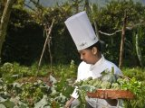 Chef is picking organic vegetable at the organic farm at the Spice Village, Thekkady