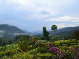 View of Bwindi Forest