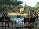 Game Viewing in Camp Jabulani