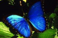 Peruvian Amazon Experience in the Tambopata Region