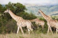 Cape Peninsula and the Big Five Safari