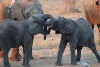 Camp Jabulani, the Elephant Back Safari - a Relais & Chateaux Lodge