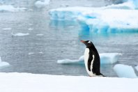 Weddell Sea Quest