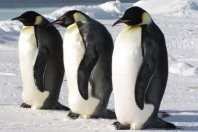 5% discount on all Classic Antarctica Cruise departures in 2017-2018