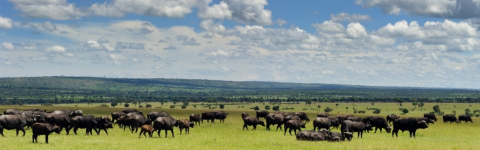 Kenya's Great Migration Special