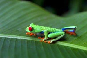 Costa Rican Eco-Journey