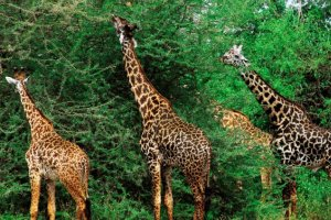 Kenya Safari & Beach Vacation