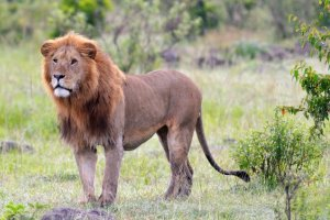 Affordable Safari in Kenya 2017