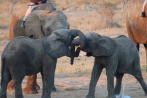 Camp Jabulani, the Elephant Back Safari - a Relais & Chateaux Lodge