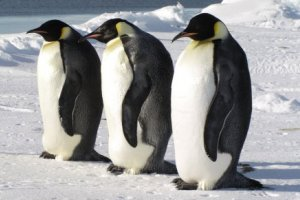 5% discount on all Classic Antarctica Cruise departures in 2019-2021