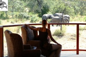 Shumbalala Game Lodge - Thornybush Nature Reserve