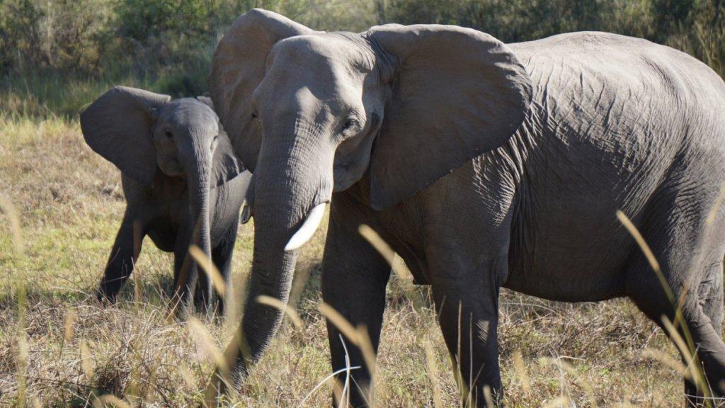 Botswana | Spiced Destinations