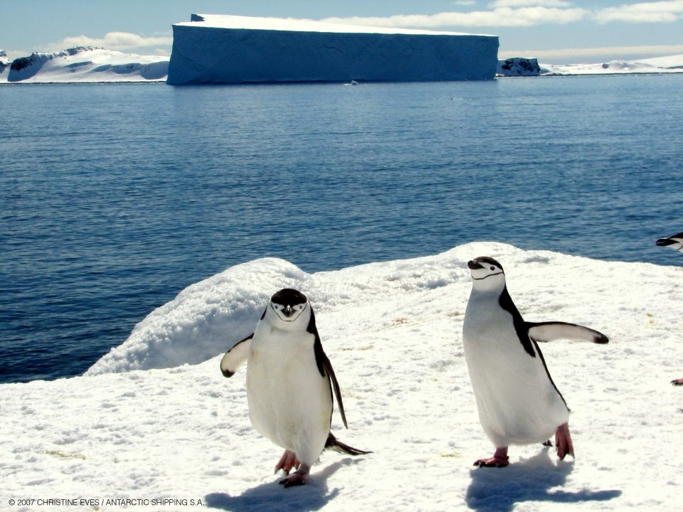 Penguins Pictures in Antarctica Penguins in Antarctica